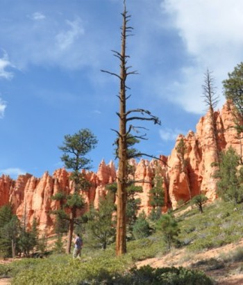 Bryce Canyon Queens Garden Hike