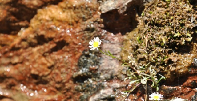 Zion National Park Flowers