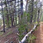 Navajo-Lake-Loop-Trail