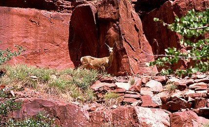 Zion Animal Viewing